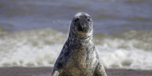 Seal Boat Trips