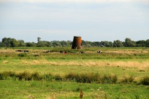 Ludham Marshes Walk 3