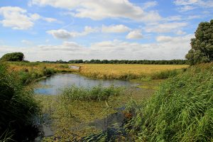 Ludham Marshes Walk 1